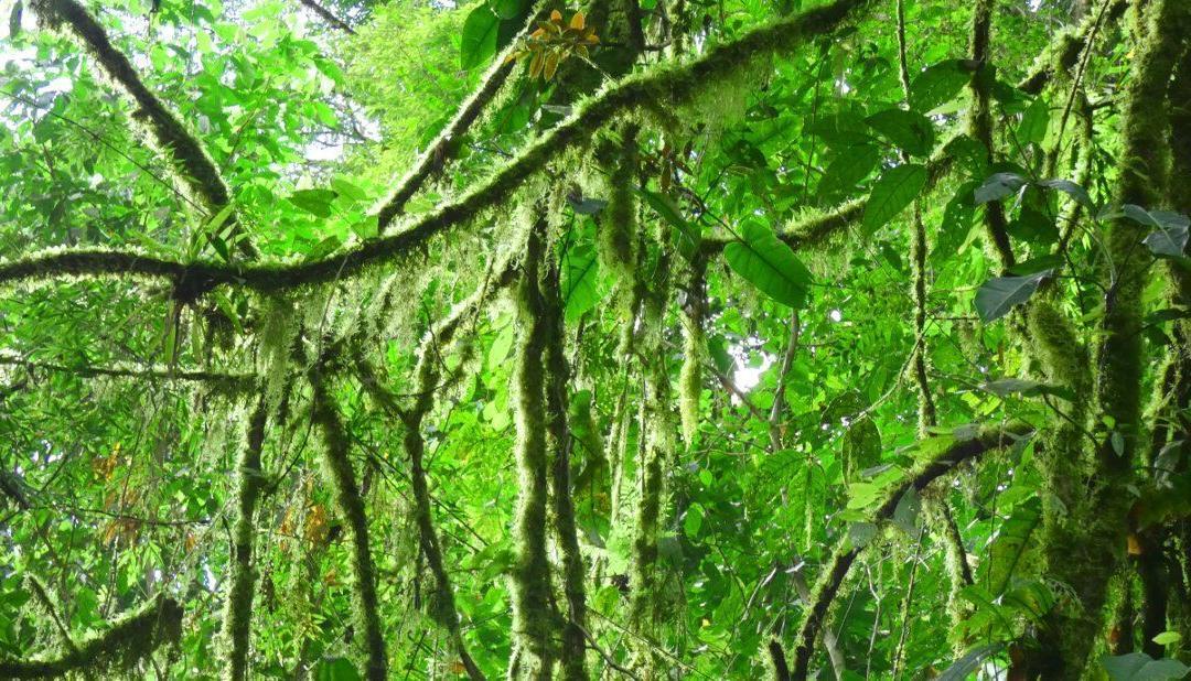 Que debe saber sobre la temporada lluviosa en Costa Rica