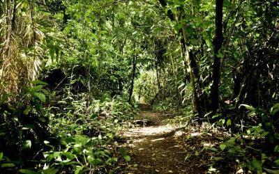 Por qué la temporada Verde en Costa Rica es una gran época para visitar Dominical
