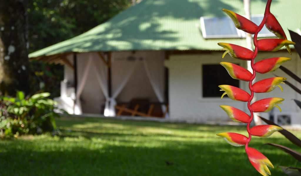enjoy-our-tropical-garden-from-your-patio-(2)-1024-600