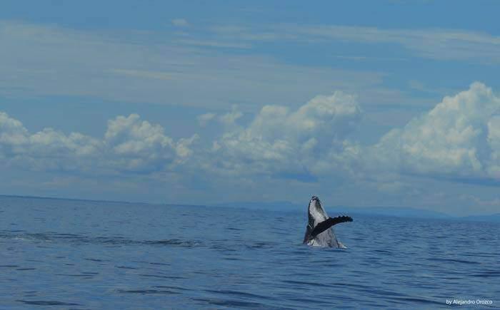 Whale Uvita, Marino Ballena, Costa Rica