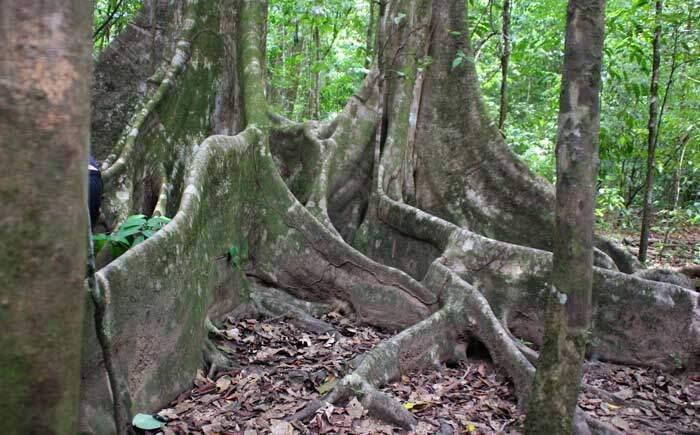 Parque Nacional Corcovado