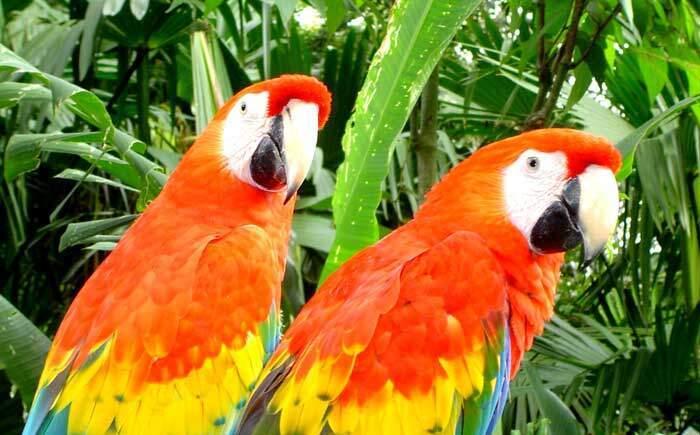Marcaws Corcovado Costa Rica