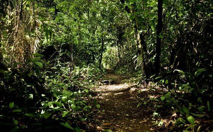 Path Corcovado National Park Costa Rica