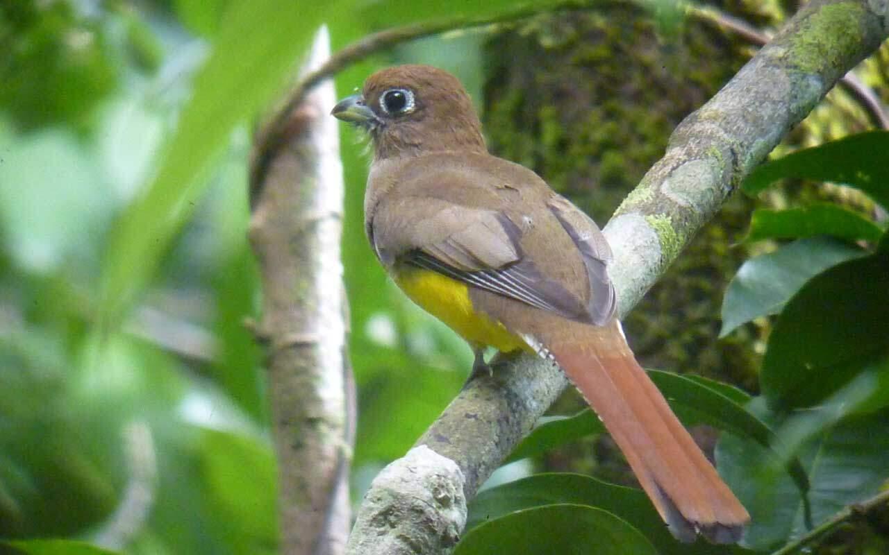 Birds at Hotel Villas Rio Mar, Dominical