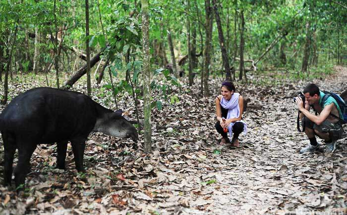 See Tapirs in Corcovado