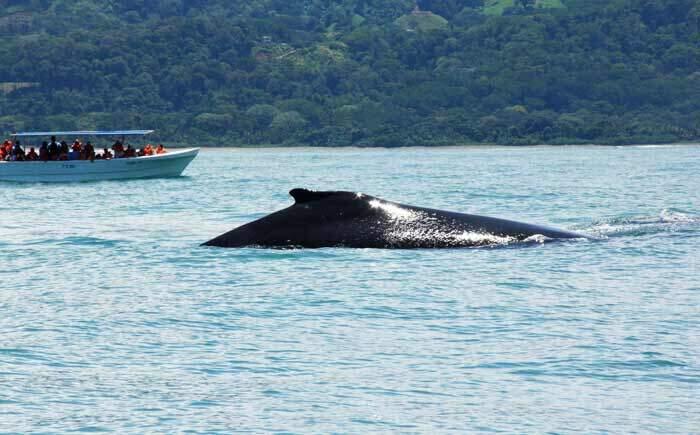 Marino Ballena Whales Watching