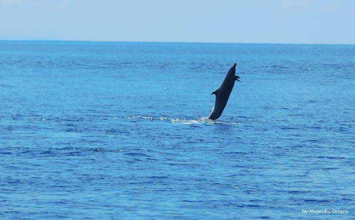 Dolphin in Uvita, Marino Ballena, Costa Rica