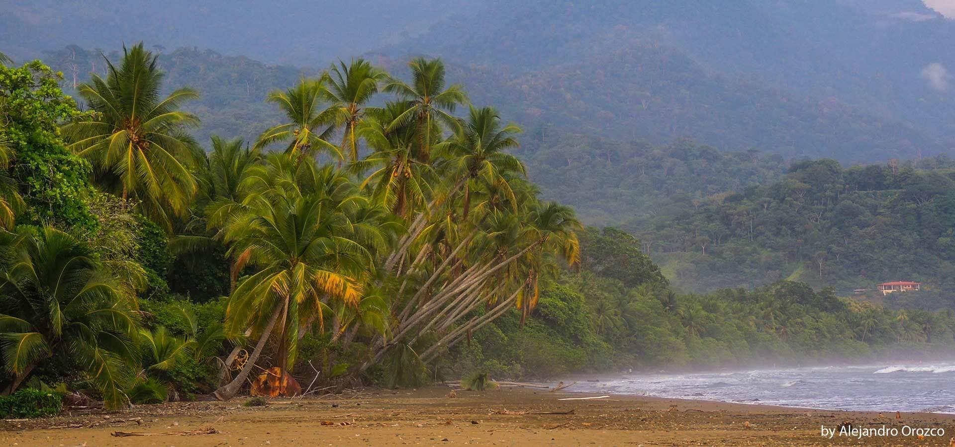 5 increíbles playas en Costa Ballena Costa Rica