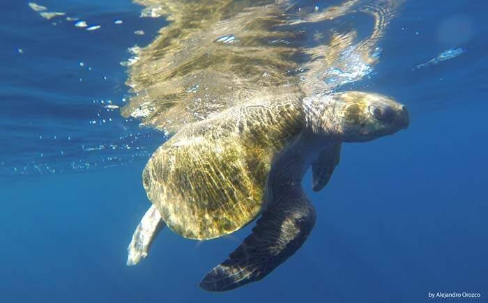 Turtle in Uvita, Marino Ballena, Costa Rica